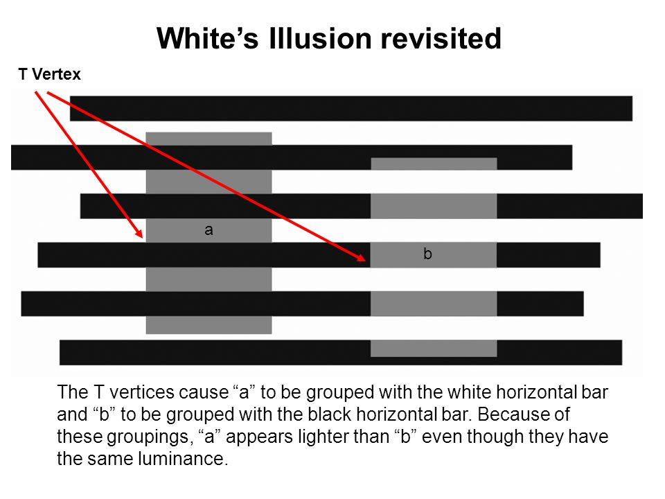 White's Illusion revisited