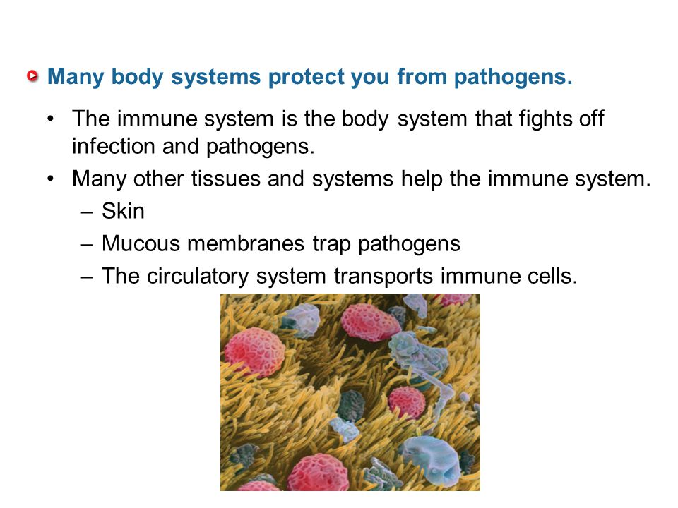 Many body systems protect you from pathogens.