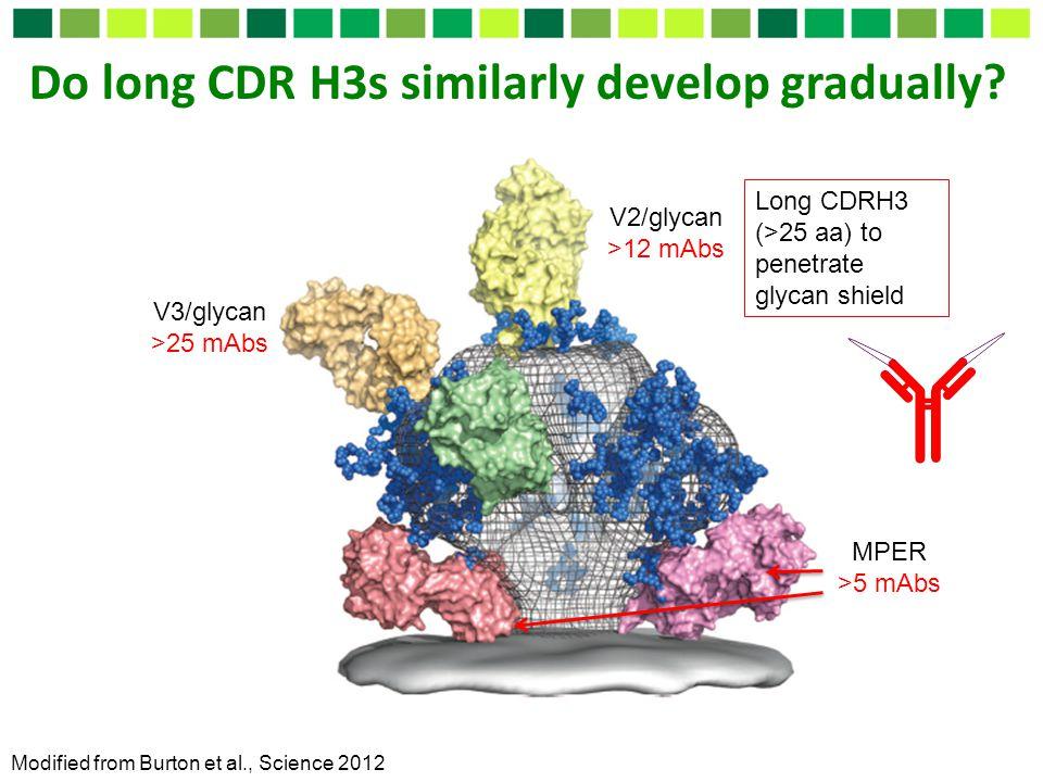 Do long CDR H3s similarly develop gradually