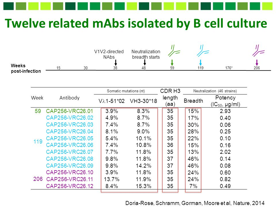 Twelve related mAbs isolated by B cell culture