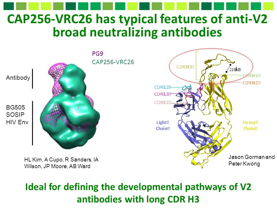 CAP256-VRC26 has typical features of anti-V2 broad neutralizing antibodies
