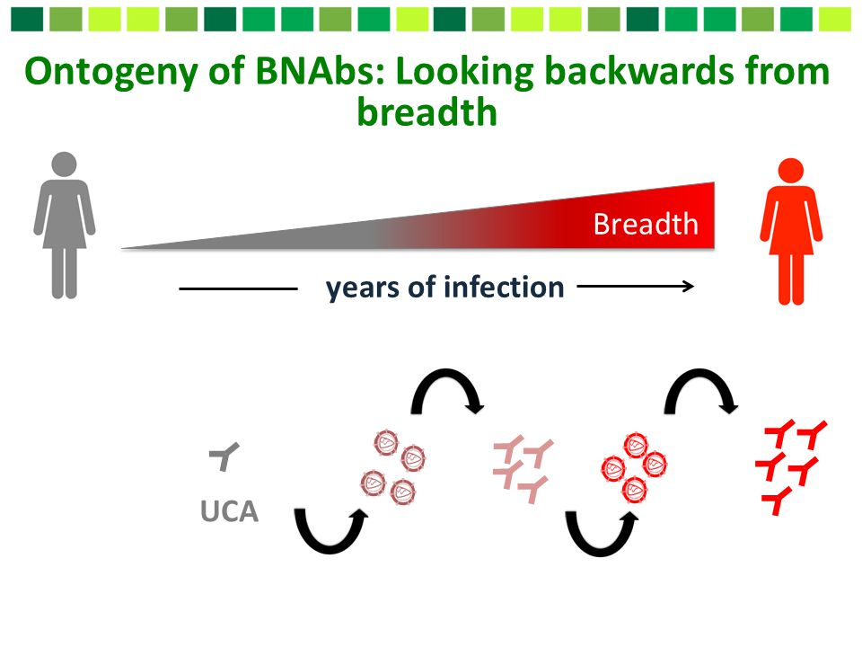 Ontogeny of BNAbs: Looking backwards from breadth
