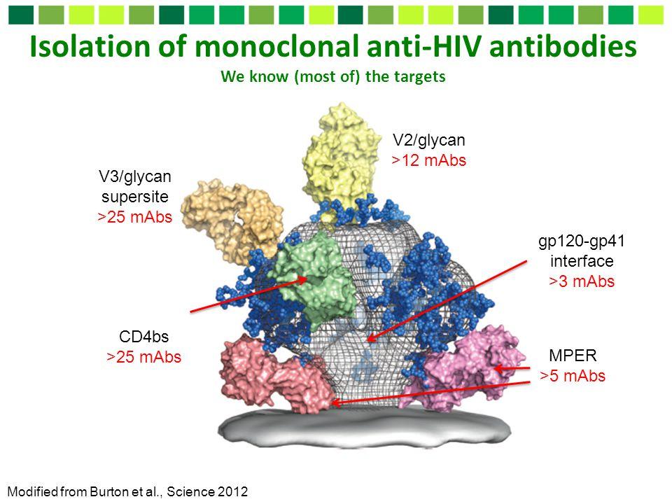 Isolation of monoclonal anti-HIV antibodies