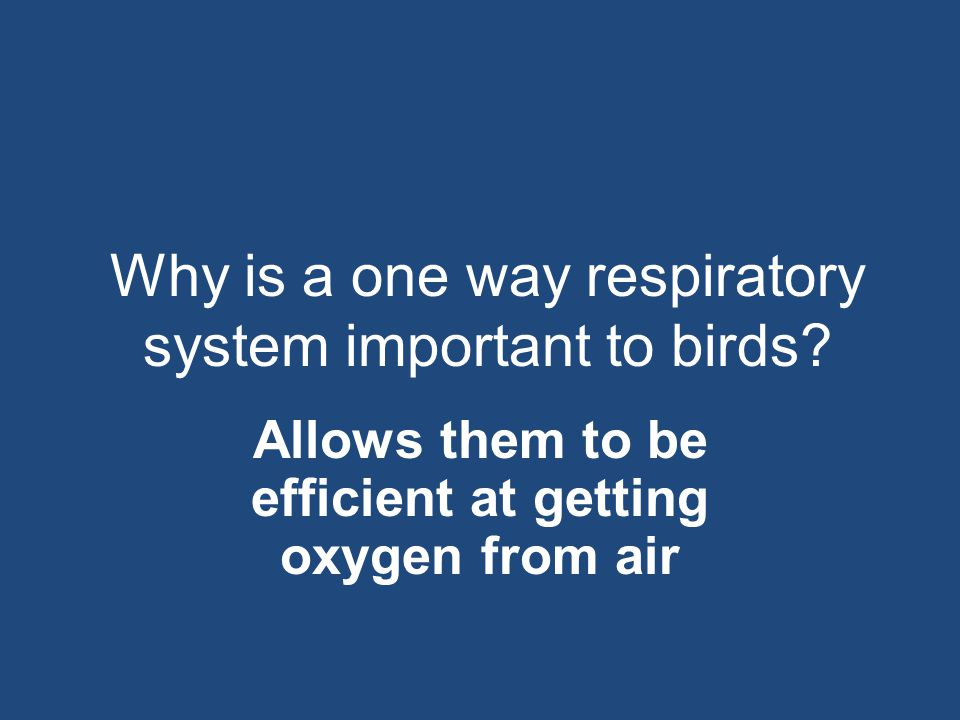 Why is a one way respiratory system important to birds