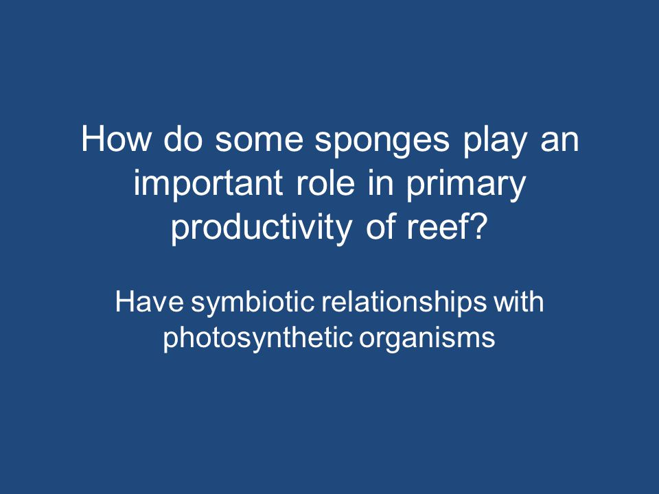 Have symbiotic relationships with photosynthetic organisms