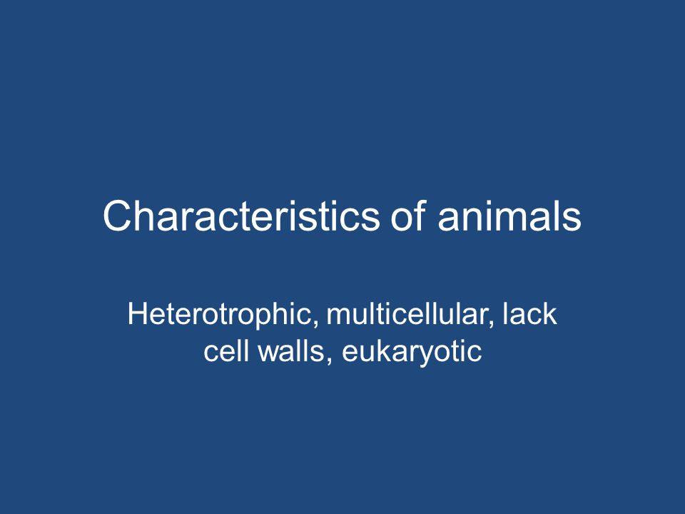Characteristics of animals