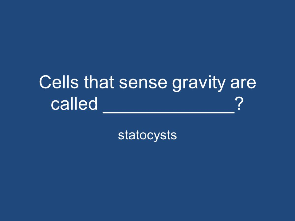 Cells that sense gravity are called _____________