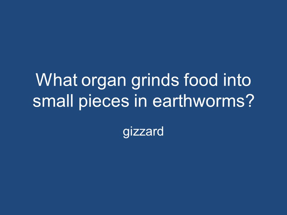 What organ grinds food into small pieces in earthworms