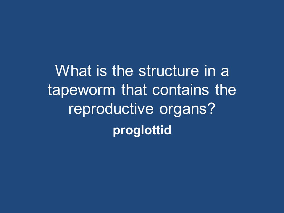 What is the structure in a tapeworm that contains the reproductive organs