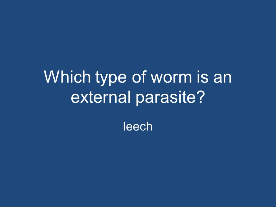 Which type of worm is an external parasite