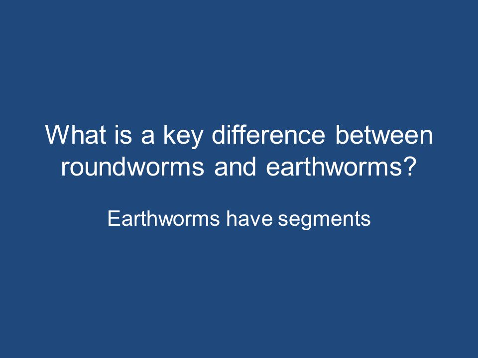 What is a key difference between roundworms and earthworms