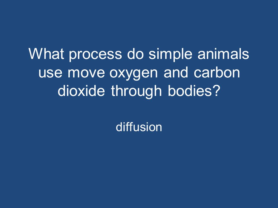 What process do simple animals use move oxygen and carbon dioxide through bodies