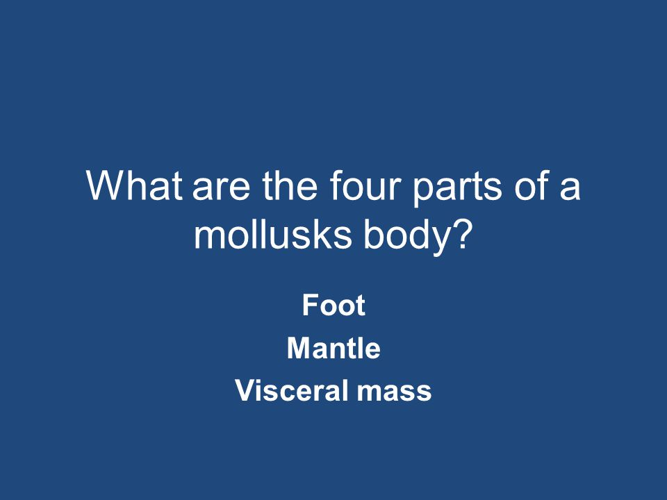 What are the four parts of a mollusks body