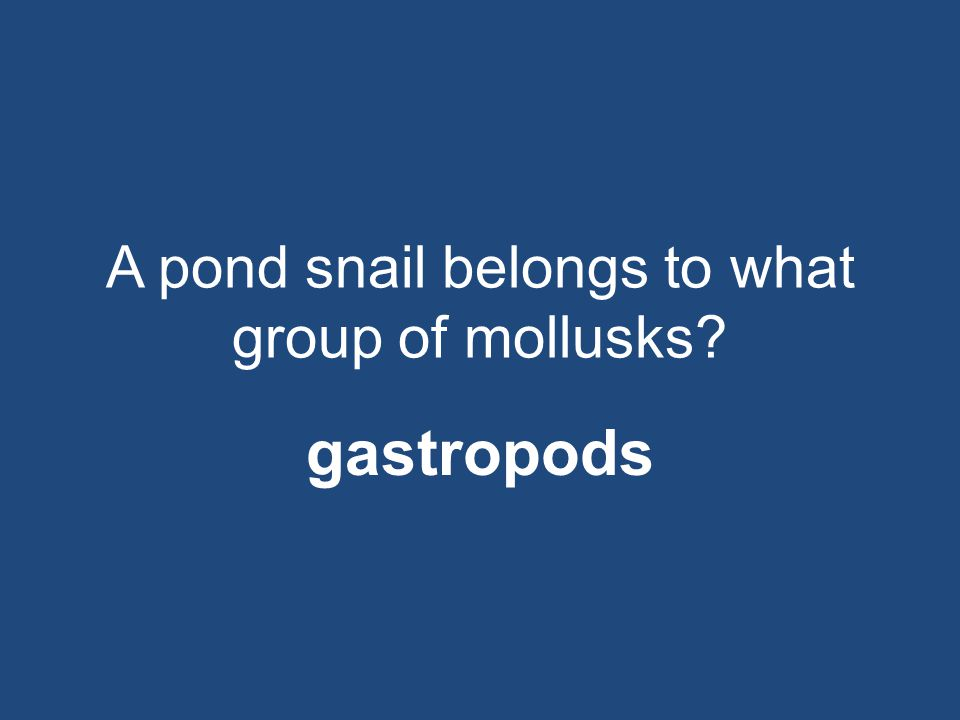A pond snail belongs to what group of mollusks