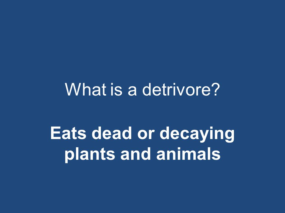 Eats dead or decaying plants and animals