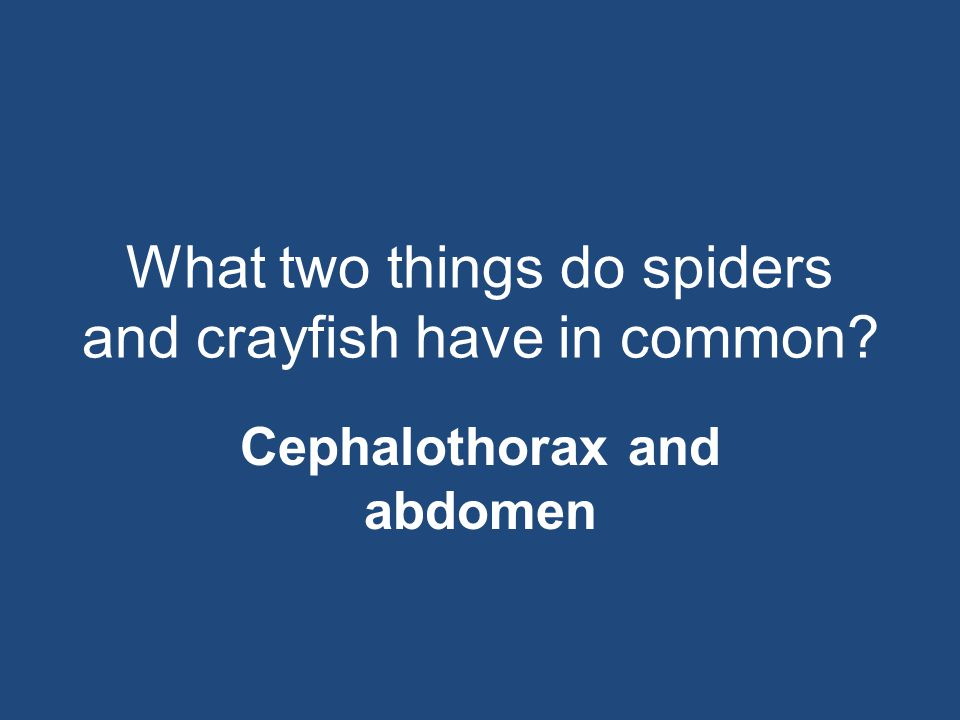 What two things do spiders and crayfish have in common