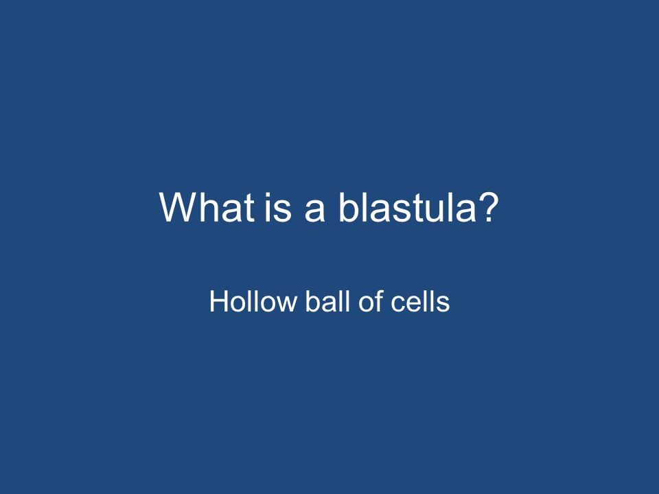 What is a blastula Hollow ball of cells