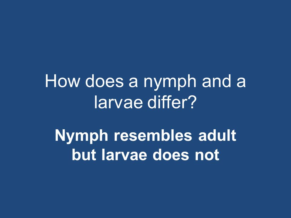How does a nymph and a larvae differ