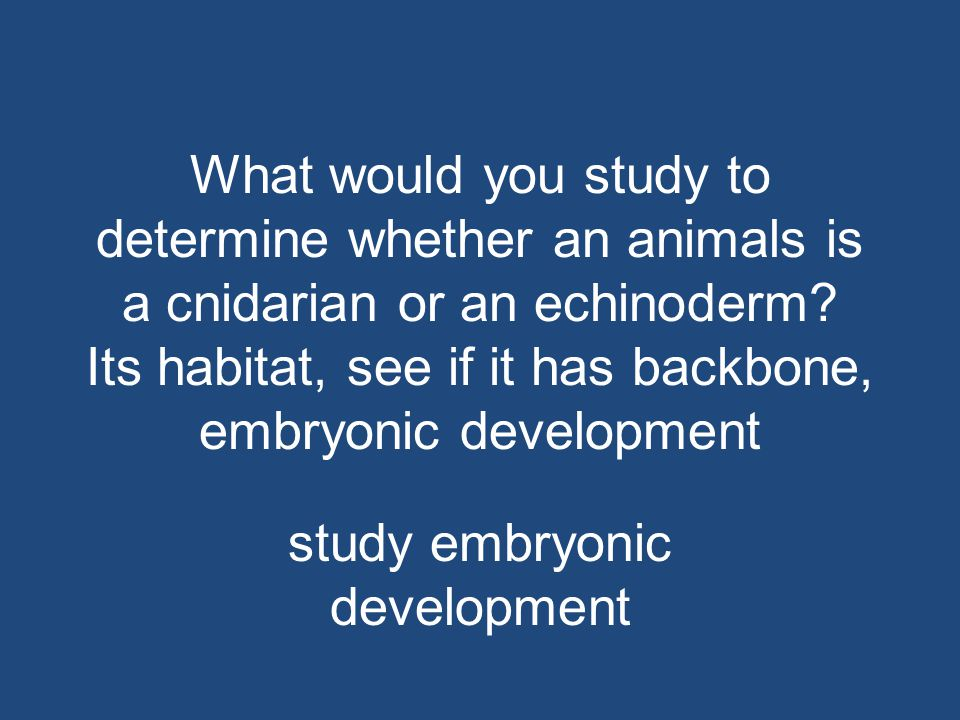 study embryonic development