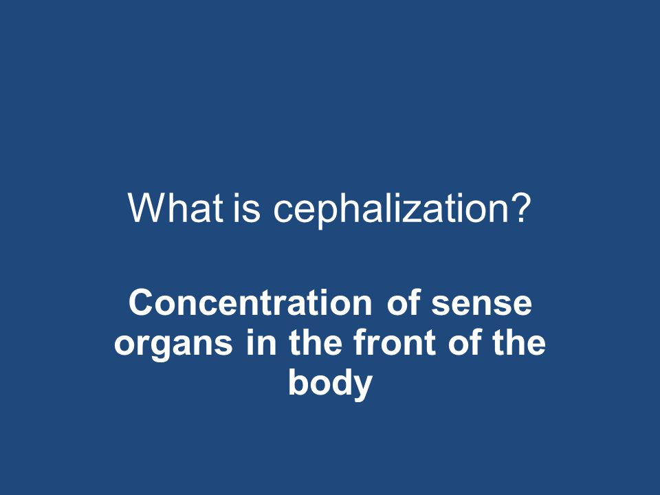 Concentration of sense organs in the front of the body