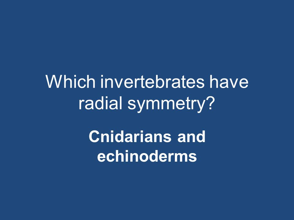 Which invertebrates have radial symmetry