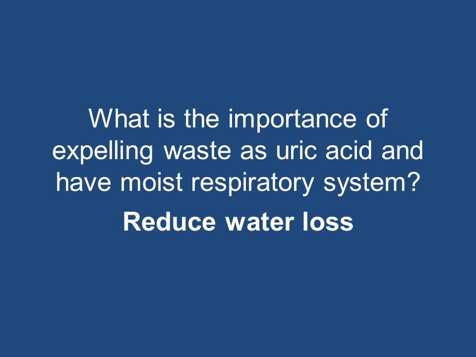 What is the importance of expelling waste as uric acid and have moist respiratory system