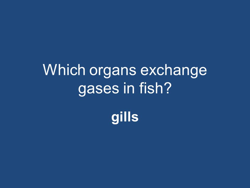 Which organs exchange gases in fish
