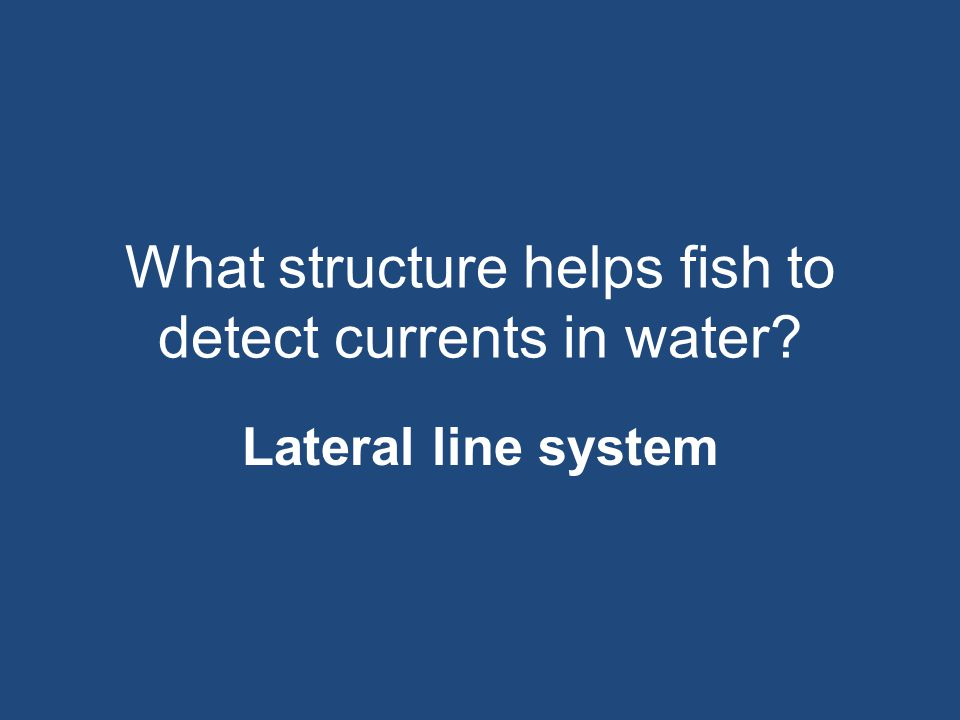 What structure helps fish to detect currents in water
