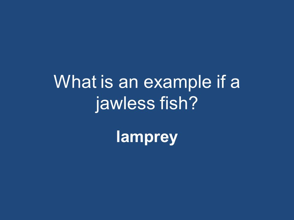 What is an example if a jawless fish