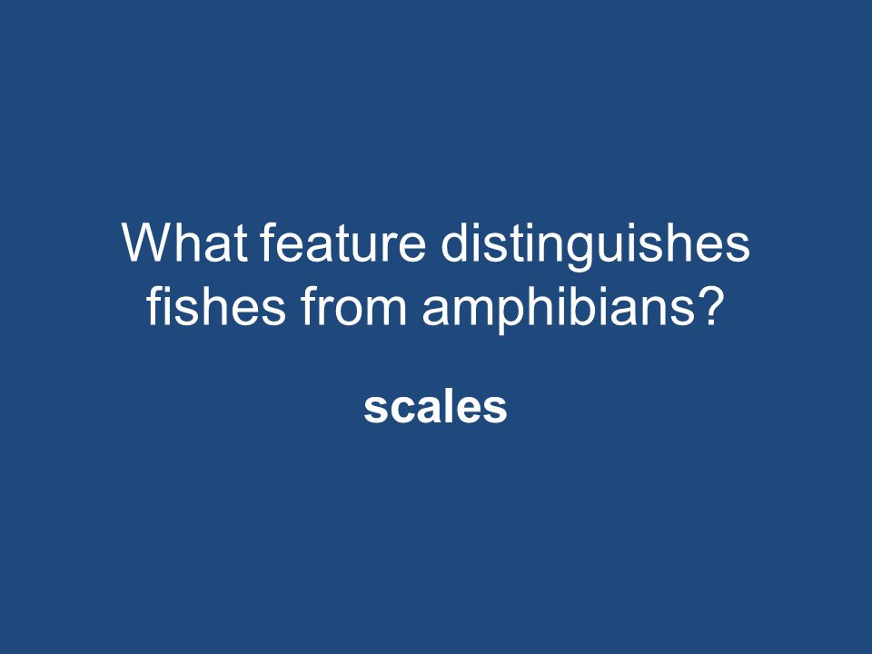 What feature distinguishes fishes from amphibians