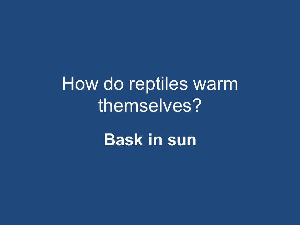 How do reptiles warm themselves