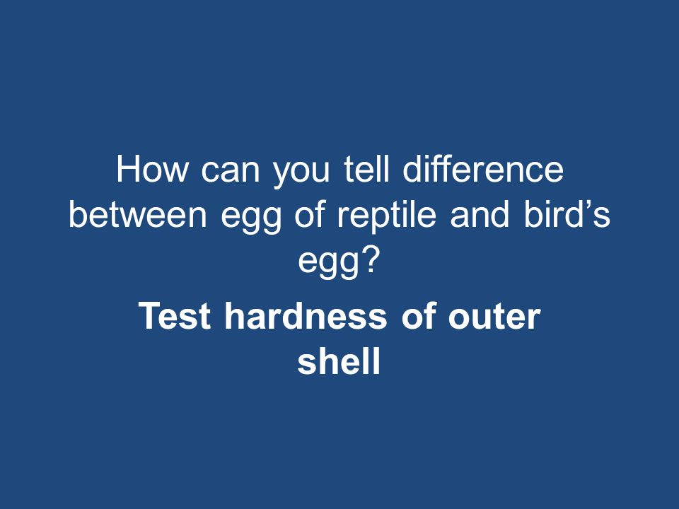 How can you tell difference between egg of reptile and bird's egg