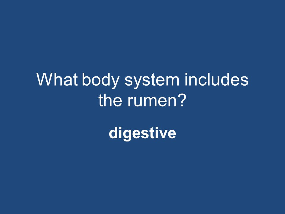What body system includes the rumen