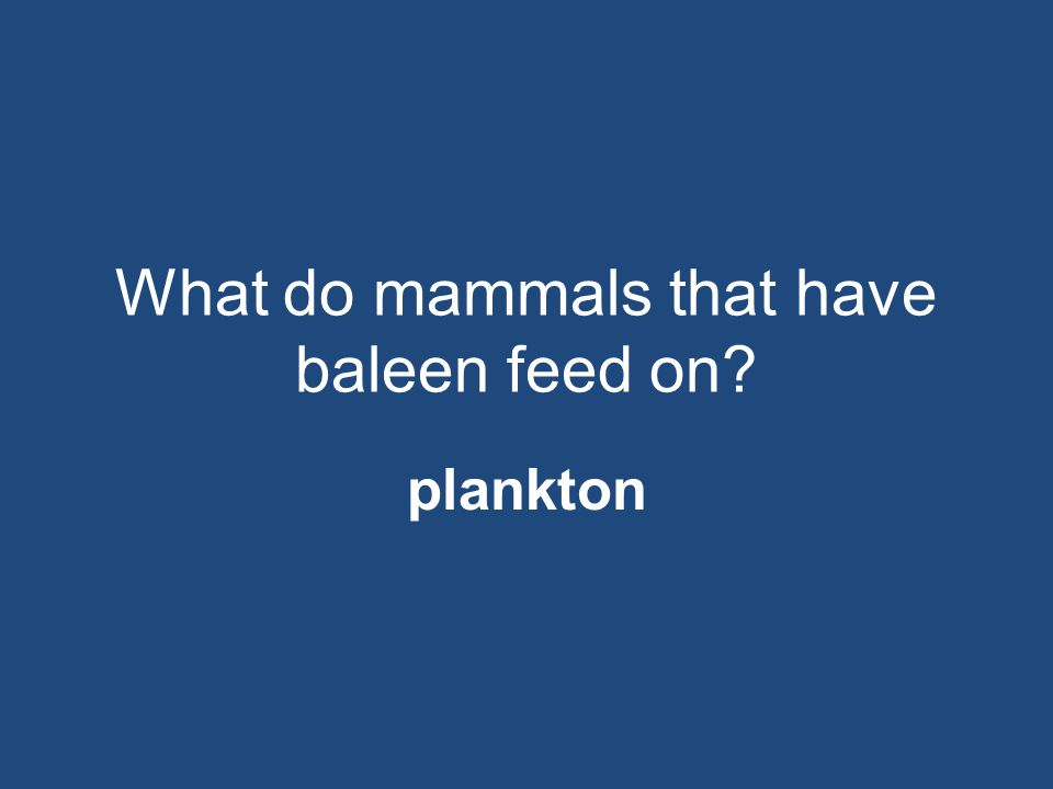 What do mammals that have baleen feed on
