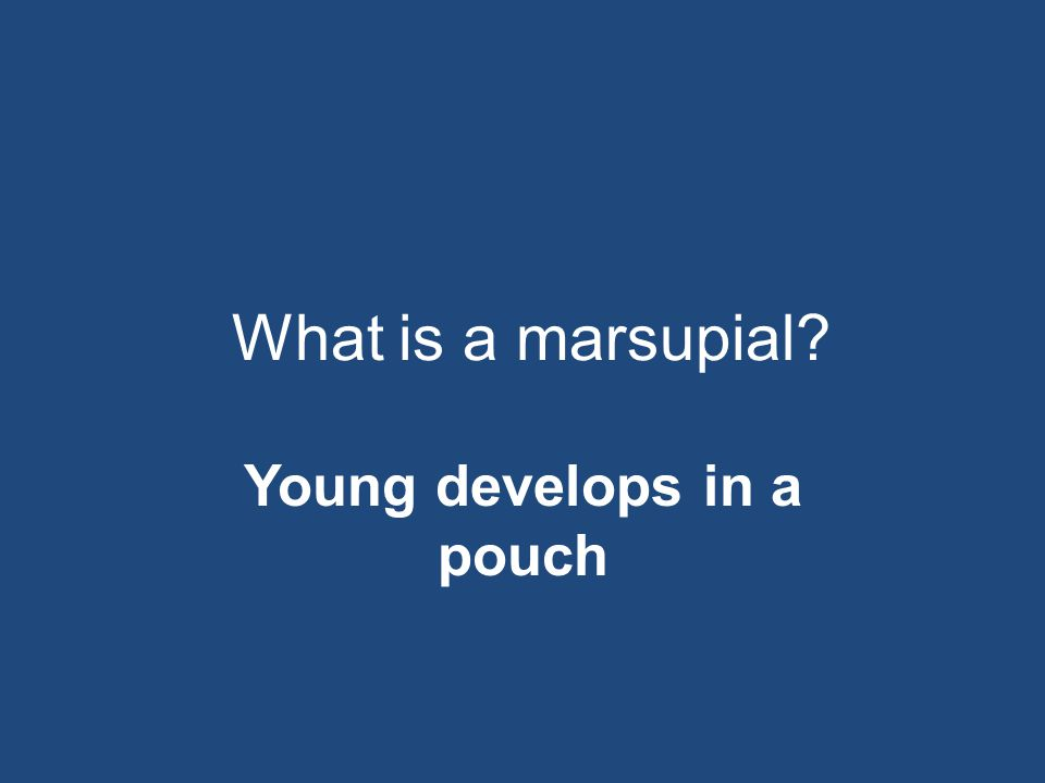 Young develops in a pouch
