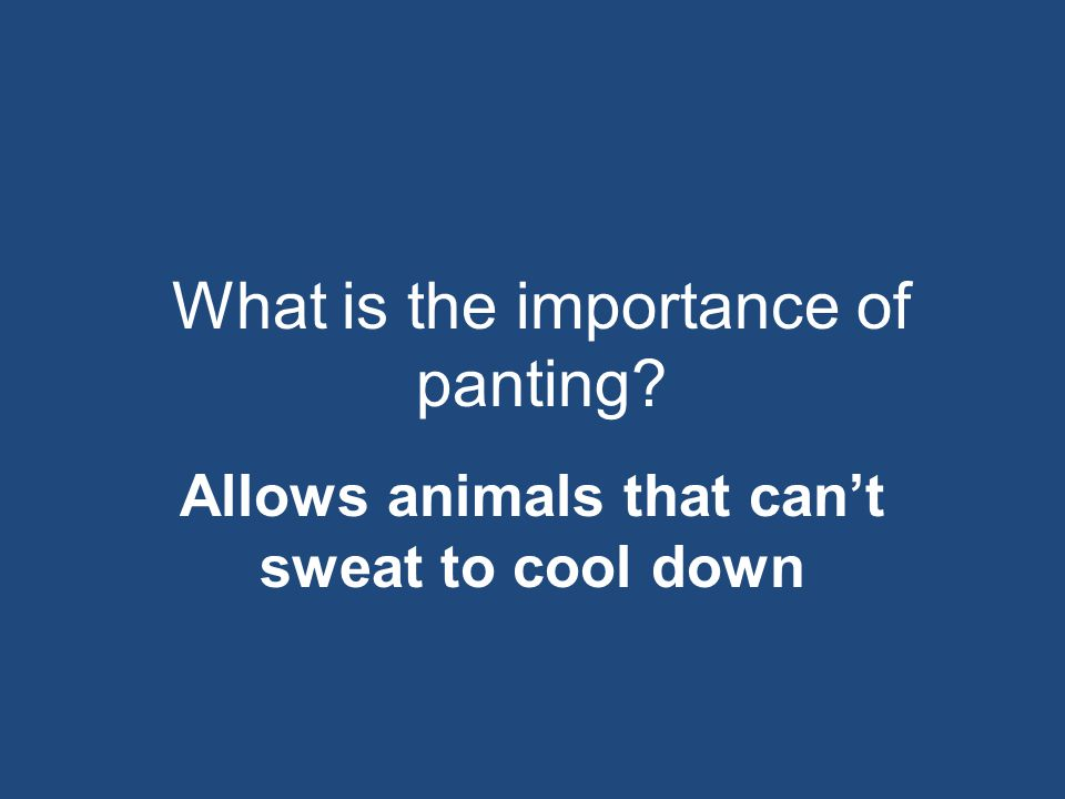 What is the importance of panting