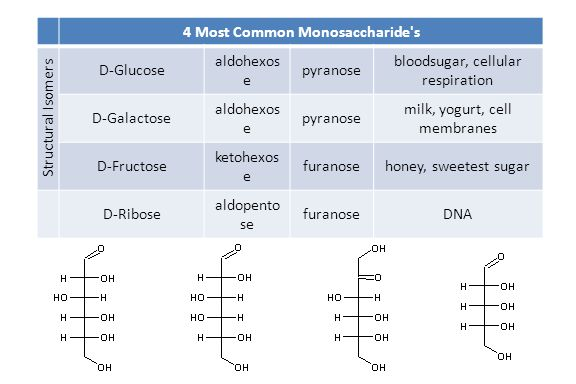 4 Most Common Monosaccharide s