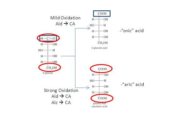 Mild Oxidation Ald  CA - onic acid - aric acid Strong Oxidation Ald  CA Alc  CA