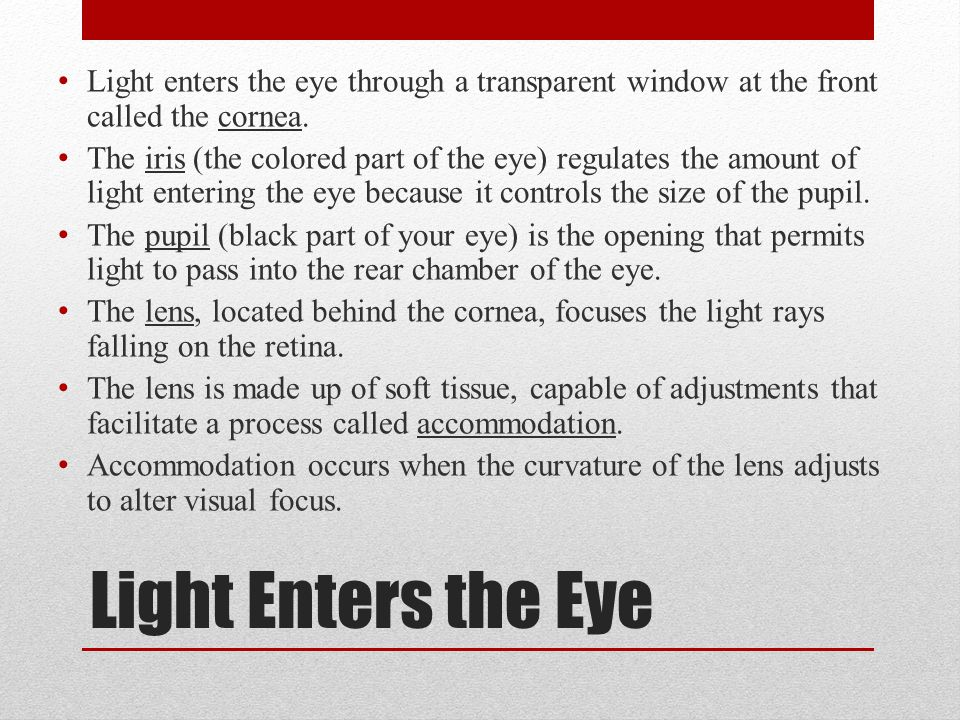 Light enters the eye through a transparent window at the front called the cornea.