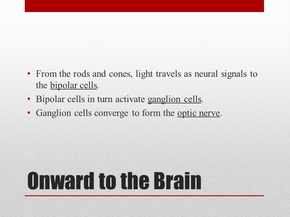 From the rods and cones, light travels as neural signals to the bipolar cells.