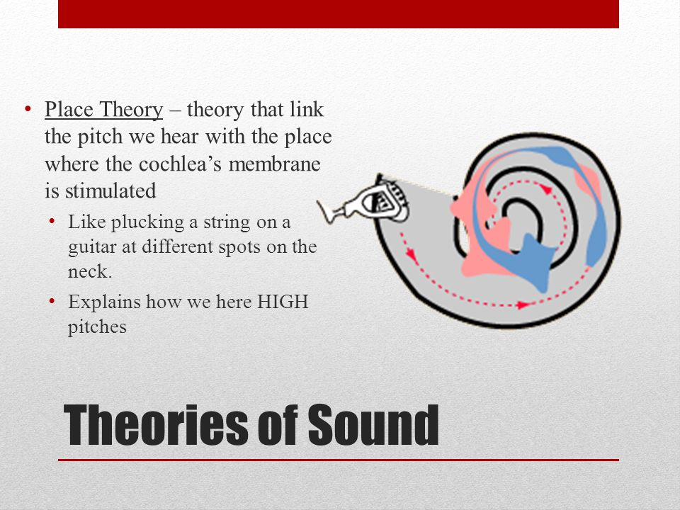 Place Theory – theory that link the pitch we hear with the place where the cochlea's membrane is stimulated