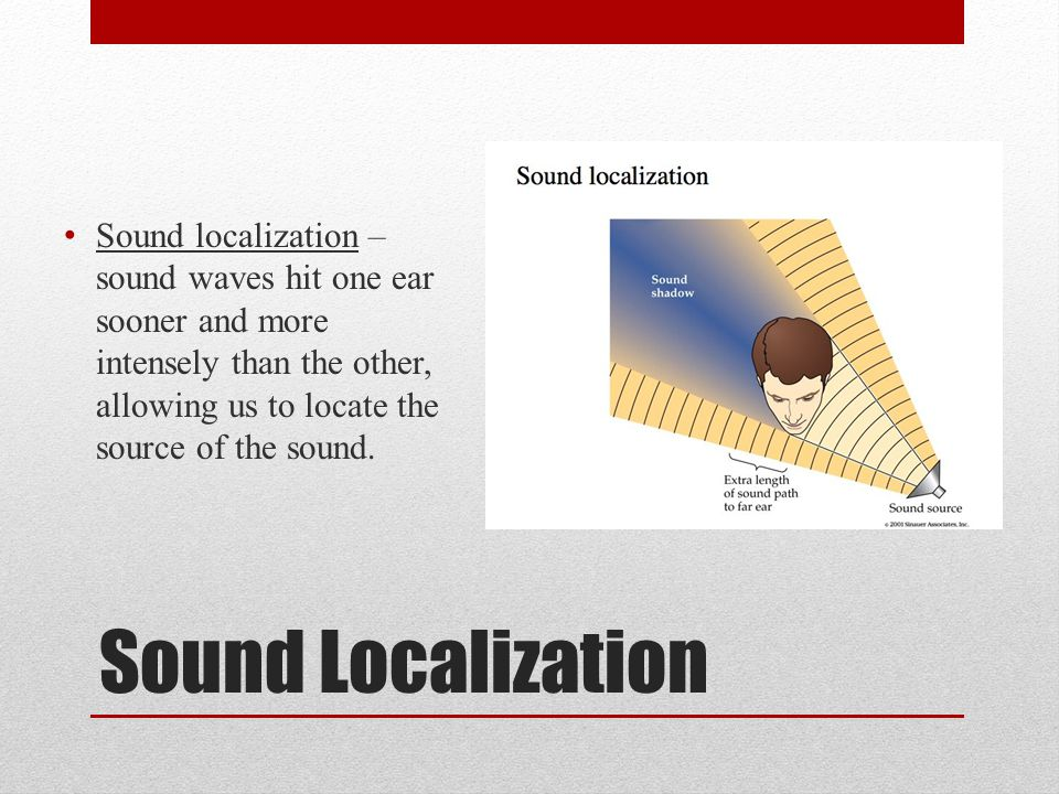 Sound localization – sound waves hit one ear sooner and more intensely than the other, allowing us to locate the source of the sound.