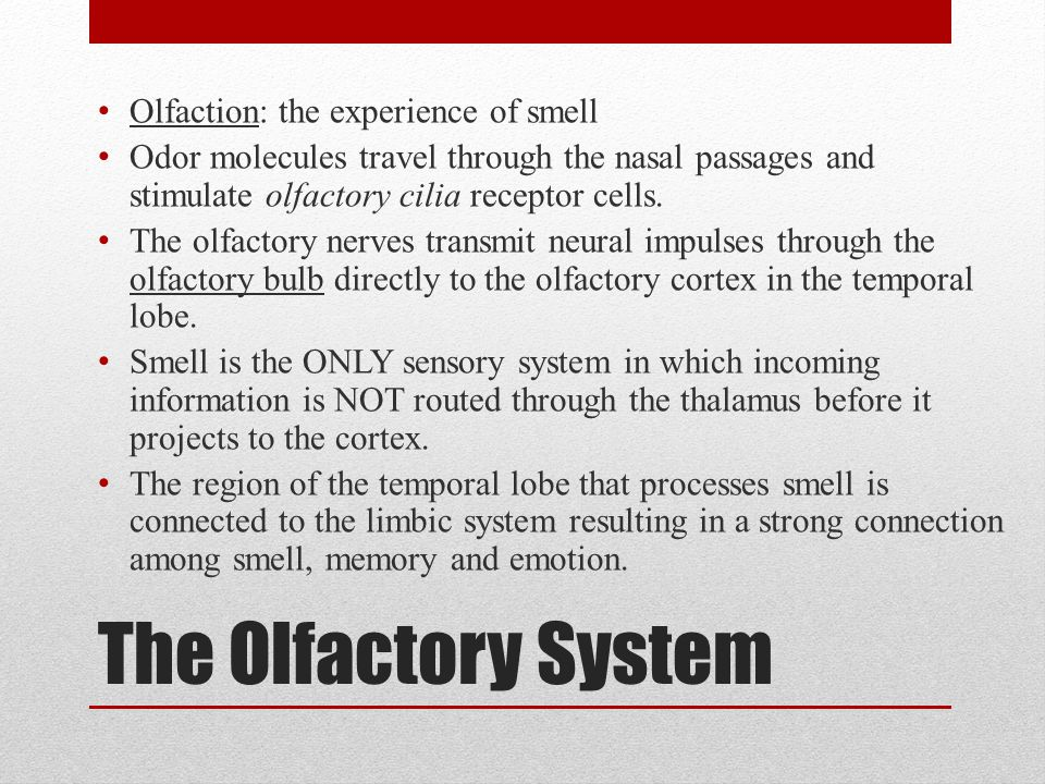 The Olfactory System Olfaction: the experience of smell