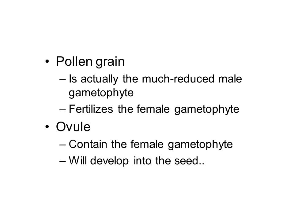 Pollen grain Ovule Is actually the much-reduced male gametophyte