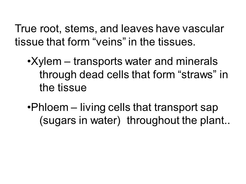 True root, stems, and leaves have vascular tissue that form veins in the tissues.