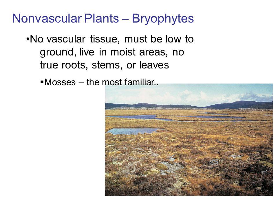 Nonvascular Plants – Bryophytes