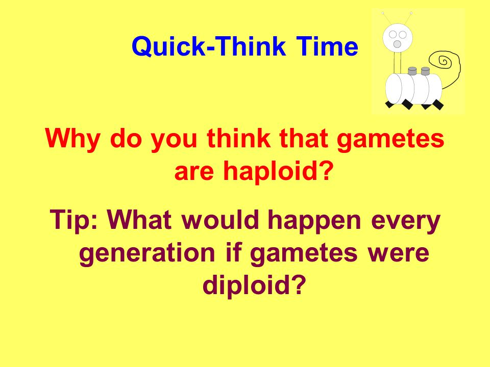 Why do you think that gametes are haploid