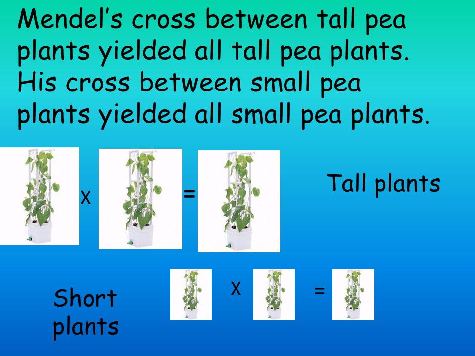 Mendel's cross between tall pea plants yielded all tall pea plants