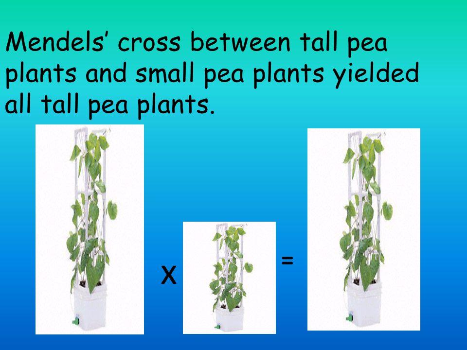 Mendels' cross between tall pea plants and small pea plants yielded all tall pea plants.