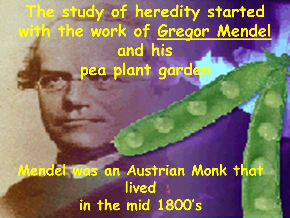 The study of heredity started with the work of Gregor Mendel and his
